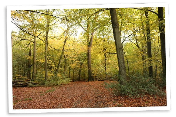 Photo of trees in woods