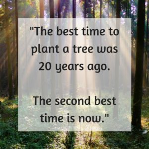 """""""The best time to plant a tree was 20 years ago. The second best time is now."""" motivational yearbook quote"""